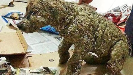 泥坑里捞出一只贪玩的小狗狗, 洗干净一看吓一跳, 原来不是狗啊!