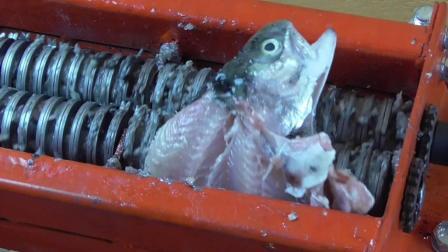 老外将生鱼直接扔进粉碎机, 网友: 切出来的生鱼片好吃吗?