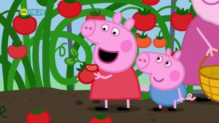 Peppa Pig Series 5 Episode 12 Grandpa Pig's Greenhouse 小猪佩奇第5季英文高清