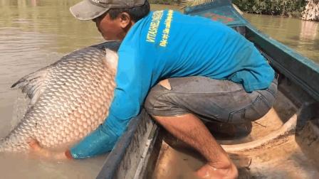 农村男子一网下去, 抓到一条比他还重的大鱼