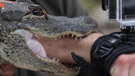 """能""""和贝爷肩并肩""""的男人, 荒野求生被小鳄鱼咬是重什么体验?"""