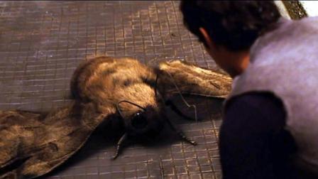 世界末日后, 人们在地下生活了200年, 扑拉蛾子长的比人都大