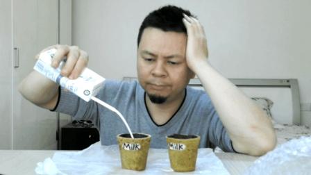 """试吃""""可以吃的杯子"""", 可以装饮料, 可以直接啃来吃"""
