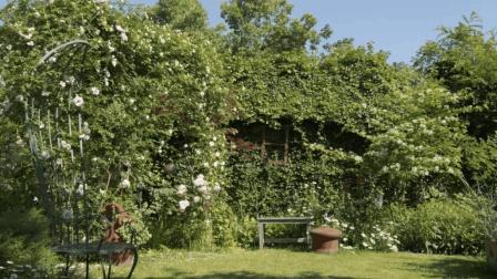 她花14年在家里造了400㎡花园, 美如仙境!