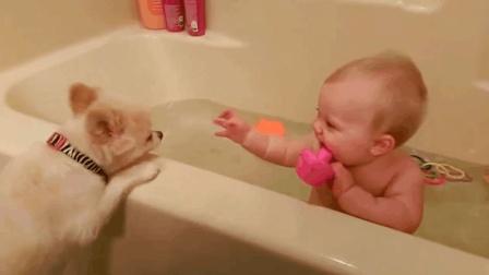 调皮的狗狗, 还以为你们在陪小宝宝洗澡呢, 其实是自己贪玩想玩水啦