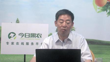 今日果农专家平台 第三讲_果树所王志强讲桃树产业, 桃树新品种
