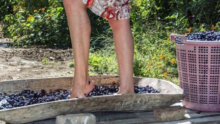 世界上最顶级的葡萄酒, 少女赤脚踩出, 看完还想喝吗?