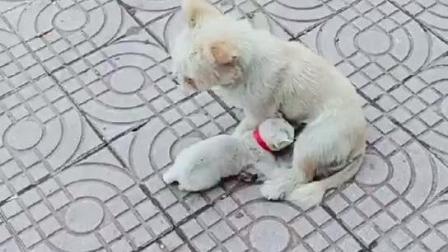 流浪狗救助流浪幼猫, 感动无数路人, 众人均均落泪