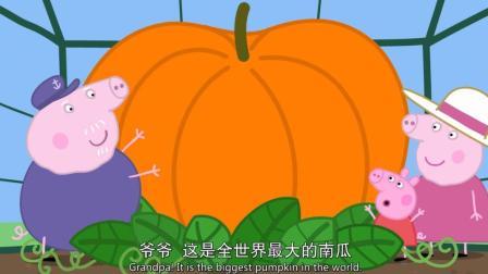 小麦英语课堂 小猪佩奇 猪爷爷在温室里给佩奇种的超大南瓜 简笔画