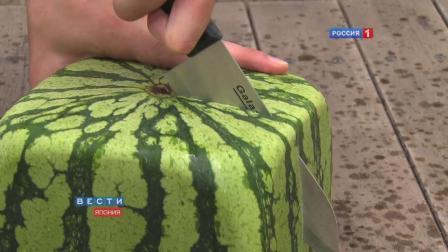 切开日本的正方形西瓜我们会看到什么? 正方形的西瓜你想吃吗?