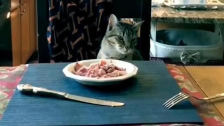 猫咪就跟做贼一样, 再三确认没人才敢偷吃的!