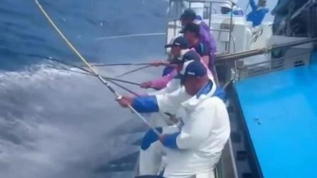 钓鱼: 这才叫钓鱼钓到手抽筋, 看着真过瘾!