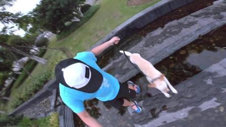 拉布拉多犬翻网又跳水