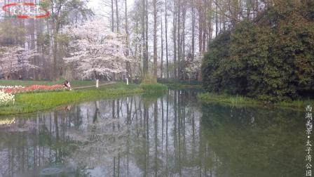 人间最美是-阳春三月, 慢游天下带您遍赏杭州如画美景02太子湾公园郁金香盛放