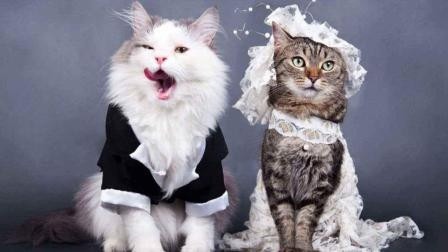 一只躺在新娘裙子上的猫, 为了它新娘连步伐也慢了下来