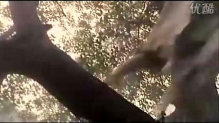 新流星蝴蝶剑中最浪漫的片段★梁朝伟与王祖贤在丛林中