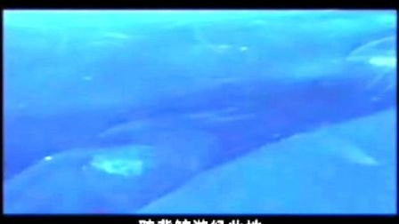看绿色和平怎样利用卫星定位追踪系统研究鲸