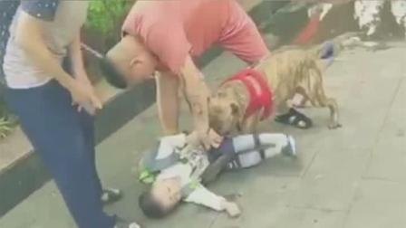 小孩放学途中被恶犬紧咬大腿不放