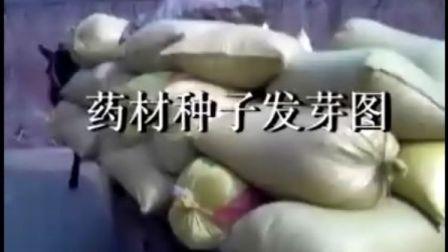 药材种子发芽图视频,中药材种植指南网