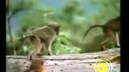 画猴与猿的前言