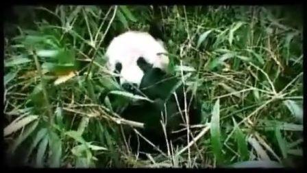 保护生物多样性朗朗—中文