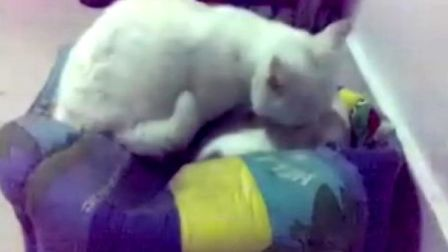 小猫咪咪给小狗娃娃洗澡