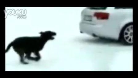 全时四驱奥迪A4与狗在雪道拼杀