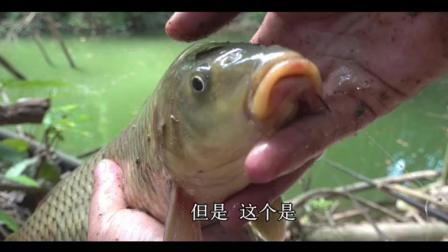 """野钓: 野生鱼力气就是大, 这么小的鱼也能大弯弓, 真的怀疑""""飞抄"""""""