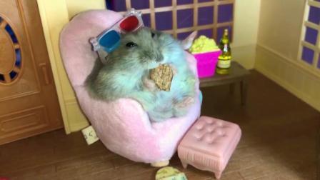 小仓鼠吃饼干, 如贵妇般的生活, 让人羡慕