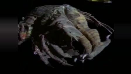 迪迦奥特曼最感人一集, 怪兽为救主人牺牲了自己不知看哭了多少人