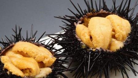 澳洲海鲜再度泛滥, 政府都极坏了, 直呼: 快引进中国吃货!