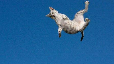实拍! 为证明猫是否有9条命, 科学家竟把猫从高楼扔下!