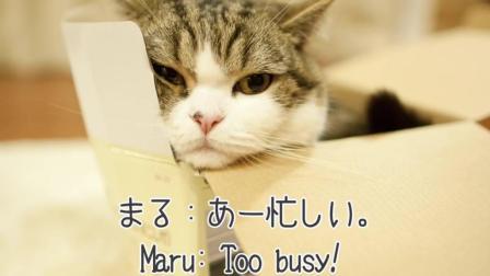 肥猫Maru和他的妹妹小花的故事