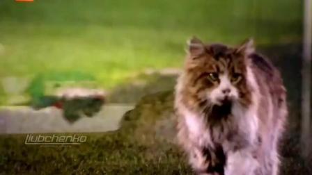 世界杯来了, 盘点一下那些闯入足球场的猫咪们