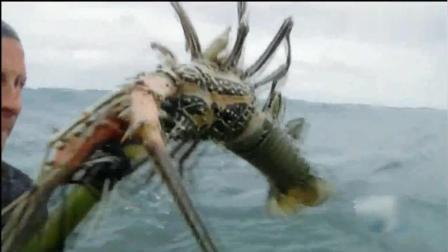 贝爷荒岛求生捉到大龙虾, 这可是我期待已久的美食!