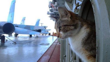 为什么在大型军舰或航母上都必须要养一只猫? 这回明白了