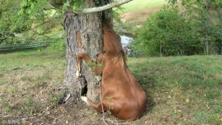 """世界上最恐怖的树! """"吃肉还吃人"""", 这""""树""""到底是什么东西? 说出来你都不敢相信"""