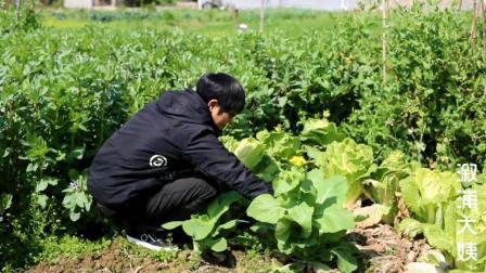 湖南农村100斤菜苔才晒出一斤干, 200元都买不到一斤
