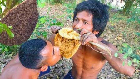 生存哥饿了, 野外大树上发现一窝蜂蜜, 直接爬上去摘了啃着吃了