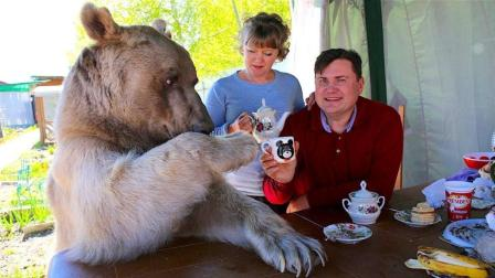 夫妻痛失儿子后, 把熊当作亲儿子养, 网友: 熊孩子?