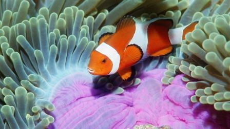十二星座重生在海洋, 你会是什么动物?