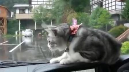 猫主子太出戏 频繁躲避雨刮器