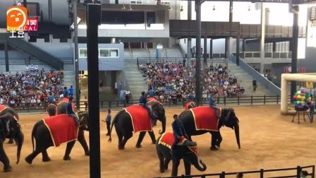 泰国皇家马戏团大象表演, 齐刷刷的象腿好壮观