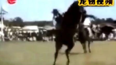 人与马的爆笑镜头