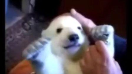 搞笑动物!可爱的北极熊宝宝