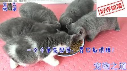 听到主人喊吃饭了, 几只小猫迅速到位, 公猫母猫的表现令人意外