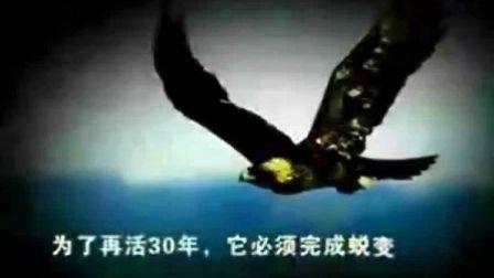 鹰之重生(高清版、清晰版、完整版)—最具震撼的视频