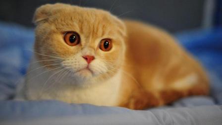 2018年6月可爱的小猫视频汇编-搞笑宠物视频