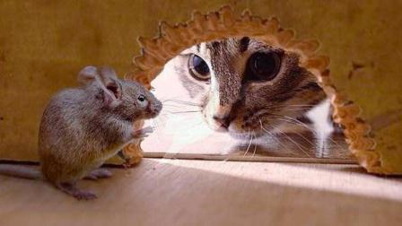 老猫捉老鼠, 没想到老鼠躲在车轱辘里, 差点狂秀老猫一脸