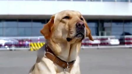 主人一个星期不在家, 狗狗跑30多公里寻找主人, 最后看哭了